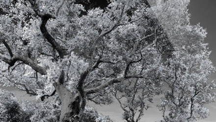 Tips to Convert Your Images to Infrared
