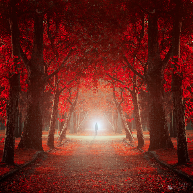 Let me in by Ildiko Neer