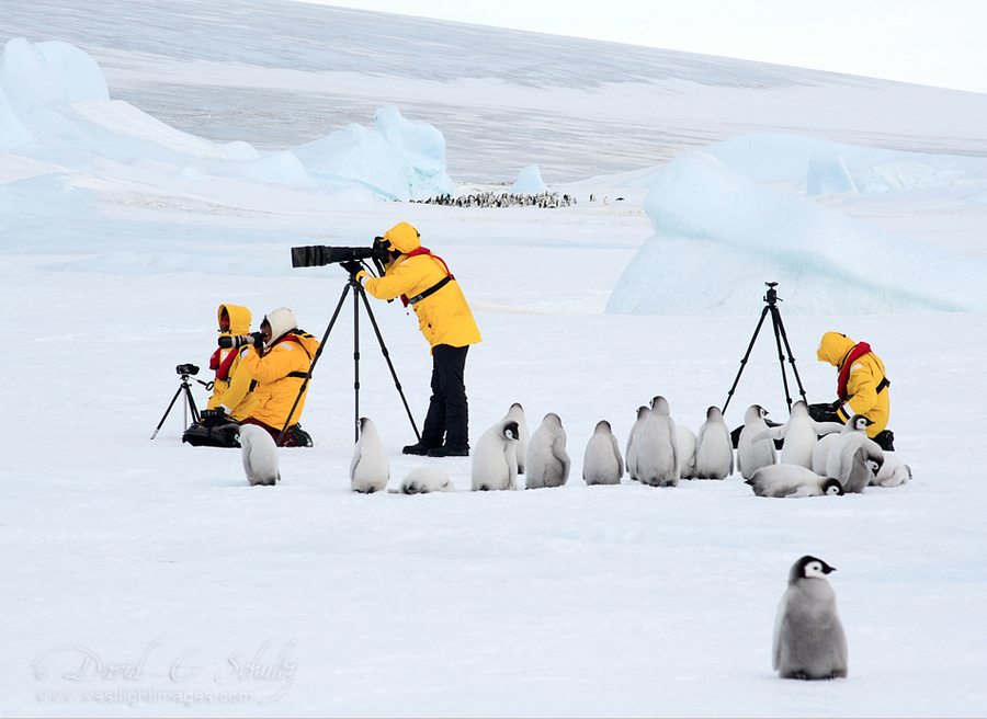 Photo Workshop...Polar Style by David C. Schultz