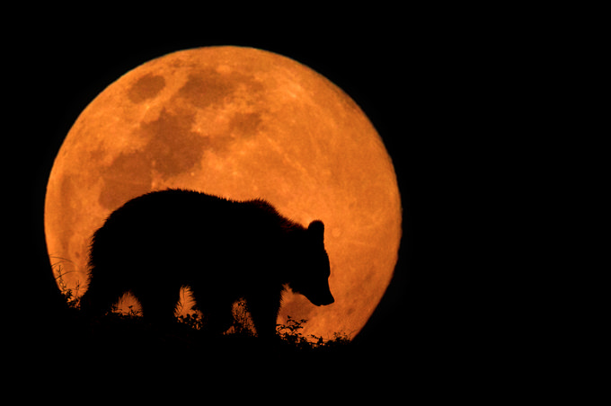 The Bear & The Moon by Mario Moreno