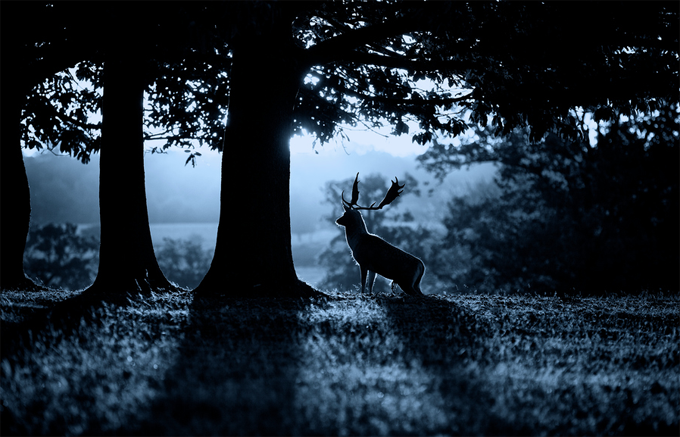 moonrise by Mark Bridger