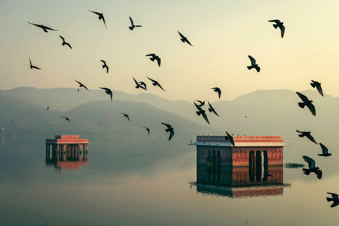 Mystic Morning - Jal Mahal by Mahesh B