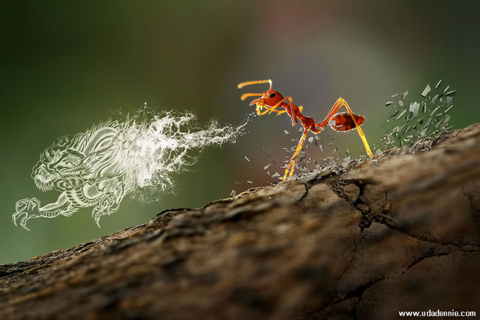 Tai Chi Ant by Uda Dennie