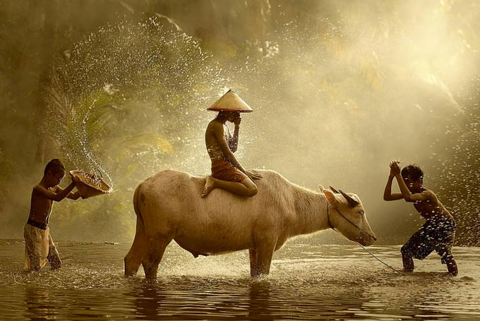 Water Buffalo by Vichaya Pop