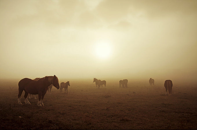 Horses in the Mist by Jordi Molas