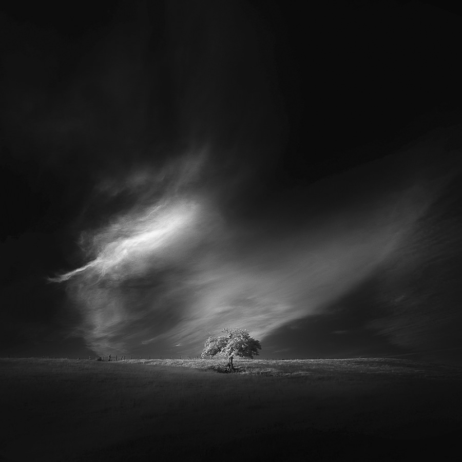 One Two Tree Part I by andy lee