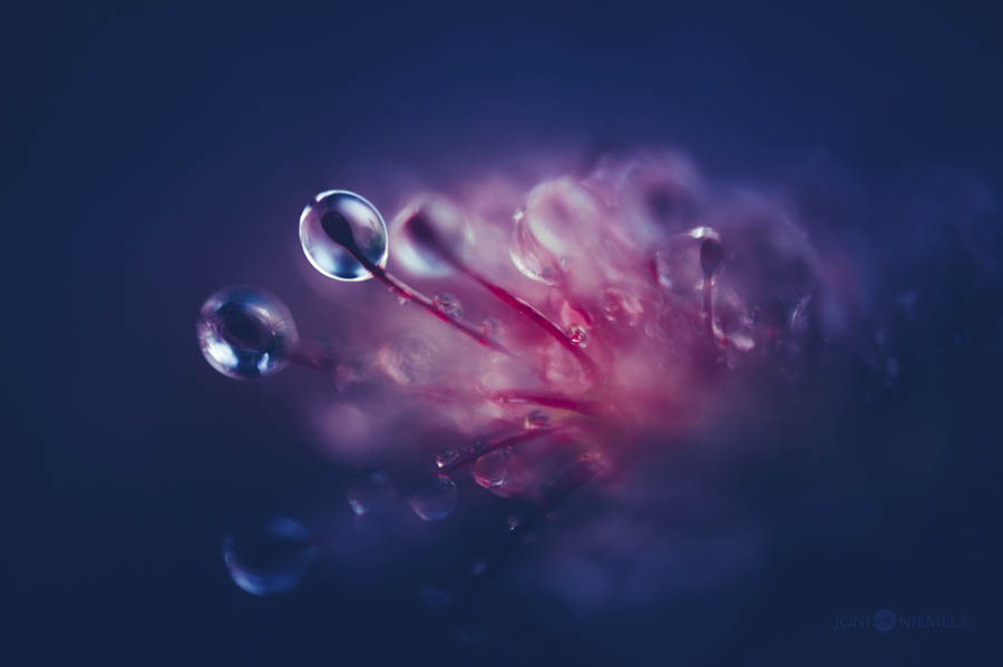 Otherworldly Blues by Joni Niemelä