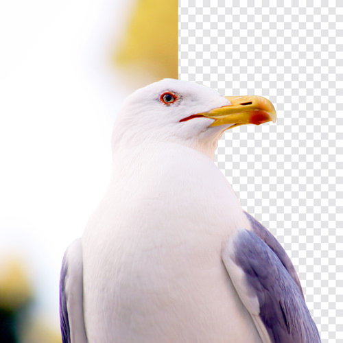 PHLEARN Before After Master Pen Tool in Photoshop
