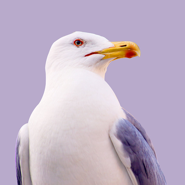 PHLEARN After Master Pen Tool Seagull Sample Image