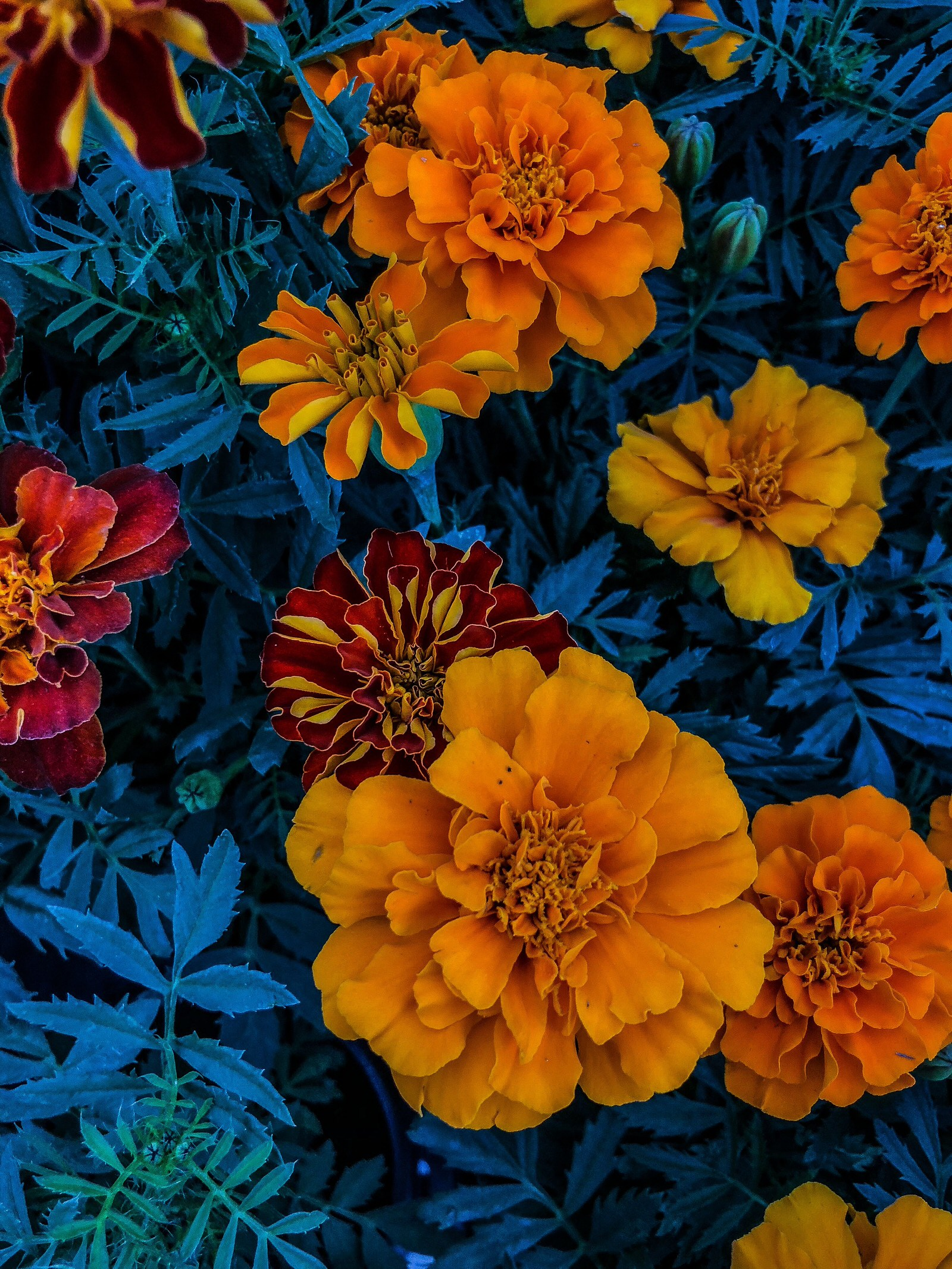Complementary Colors Example Image 2