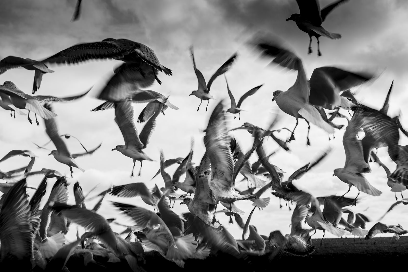 Jason Peterson Birds Image