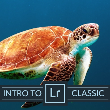 lightroom classic import and organize