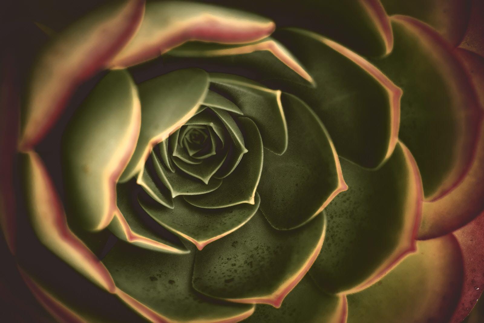 Golden Ratio in Flower Example