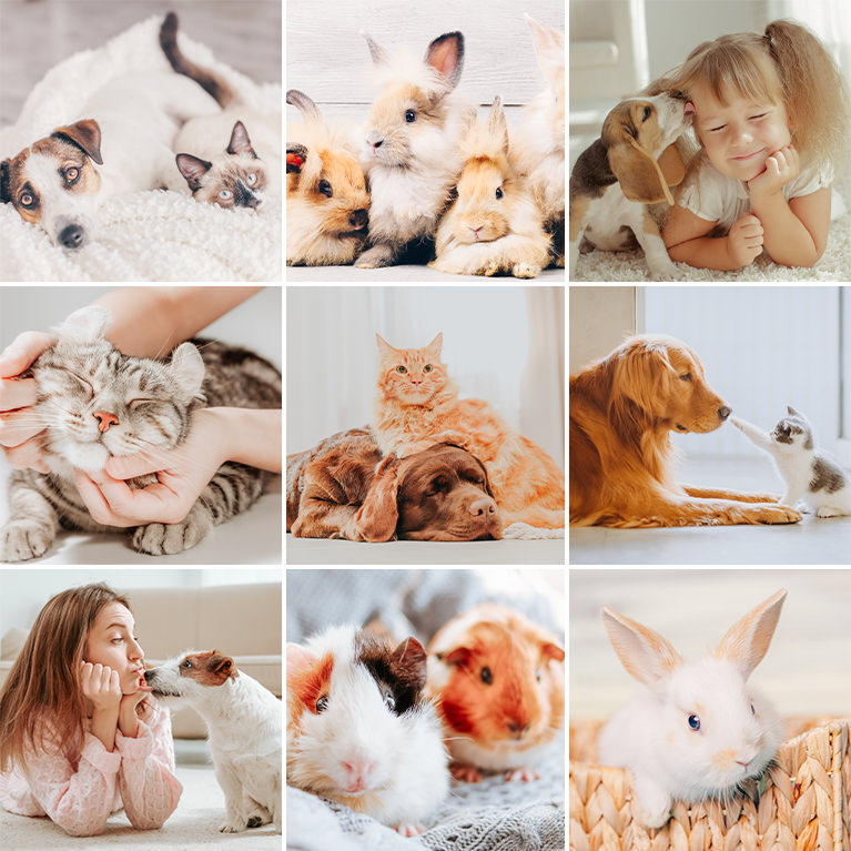 pet photos lightroom presets